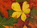 autumn_leaves_pattern_192300.jpg